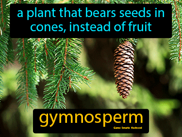 Gymnosperm Science Definition