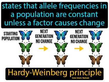 Hardy Weinberg Principle Definition Flashcard