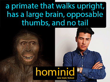 Hominid Definition Flashcard