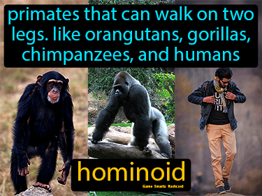 Hominoid Definition Flashcard