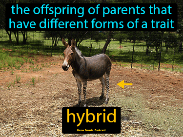 Hybrid Science Definition