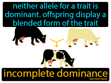 Incomplete Dominance Definition Flashcard