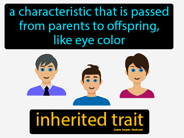 Inherited Trait Definition Flashcard