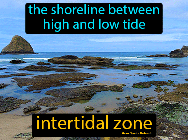 Intertidal Zone Science Definition