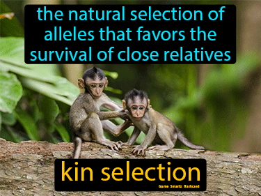 Kin Selection Science Definition