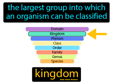 Kingdom Science Definition