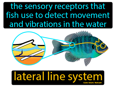 Lateral Line System Science Definition