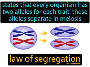 Law Of Segregation Science Definition