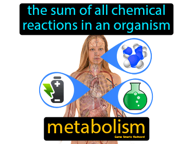 Metabolism Science Definition