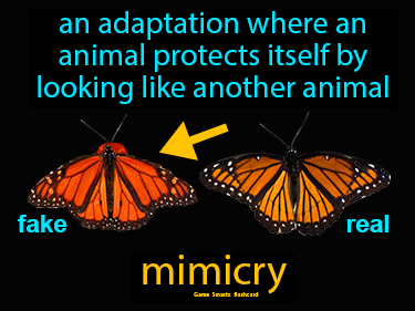 Mimicry Definition Flashcard