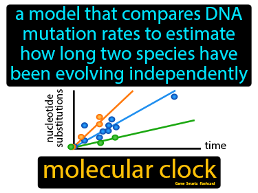 Molecular Clock Science Definition