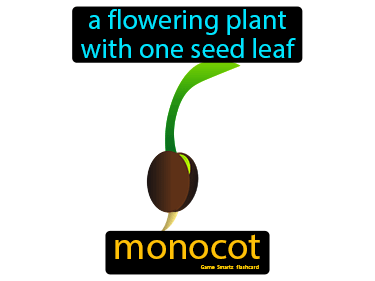 Monocot Science Definition