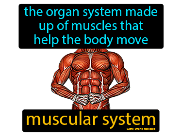 Muscular System Science Definition