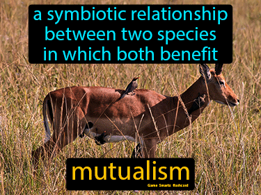 Mutualism Definition Flashcard