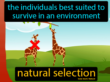 Natural Selection Science Definition