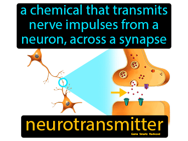 Neurotransmitter Definition Flashcard