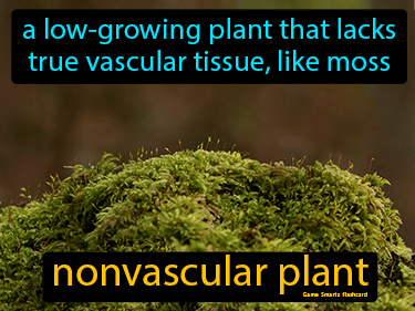 Nonvascular Plant Science Definition