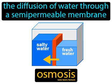 Osmosis Science Definition