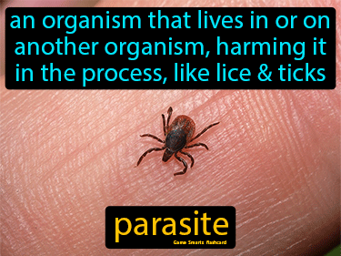 Parasite Science Definition