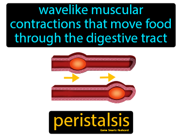 Peristalsis Science Definition