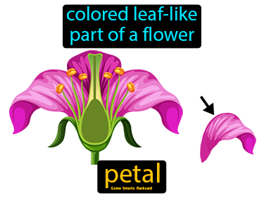 Petal Science Definition