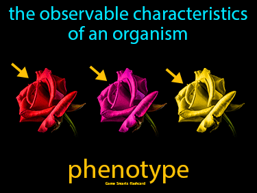 Phenotype Science Definition