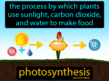Photosynthesis Definition Flashcard