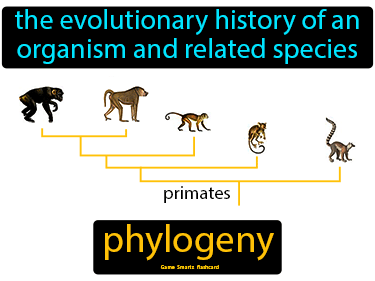 Phylogeny Science Definition