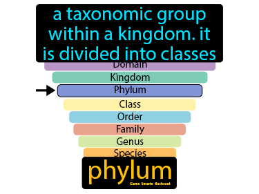 Phylum Science Definition