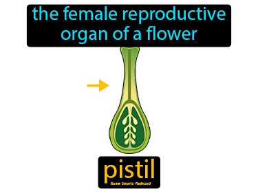 Pistil Science Definition