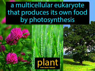 Plant Science Definition