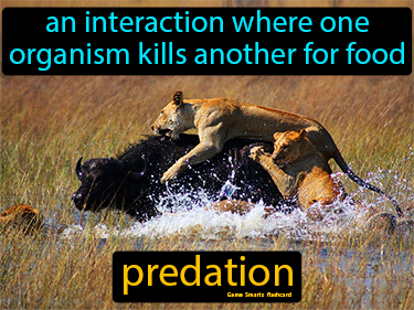 Predation Science Definition