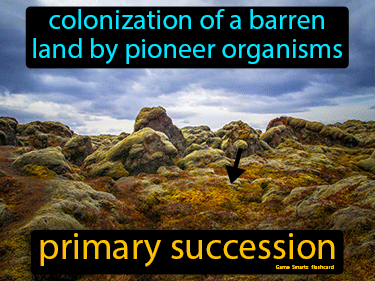 Primary Succession Science Definition