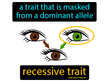 Recessive Trait Definition Flashcard
