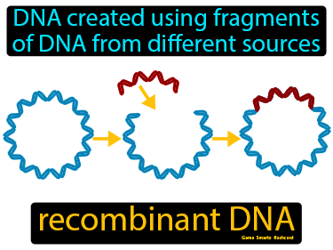 Recombinant DNA Definition Flashcard