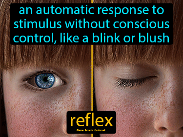 Reflex Definition Flashcard