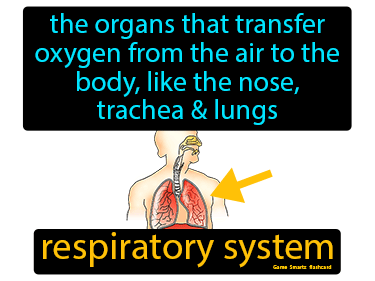 Respiratory System Science Definition