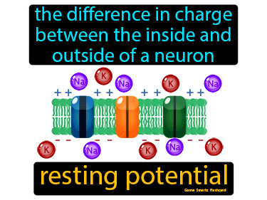 Resting Potential Definition Flashcard