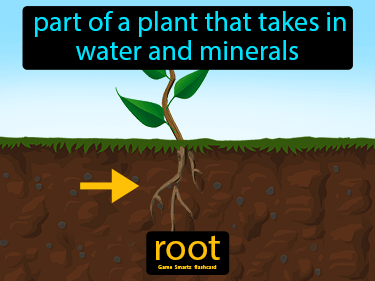 Root Science Definition