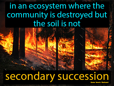 Secondary Succession Definition Flashcard