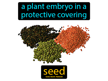 Seed Science Definition