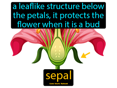 Sepal Science Definition
