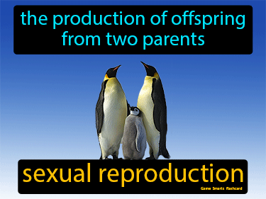Sexual Reproduction Definition Flashcard