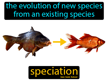 Speciation Definition Flashcard