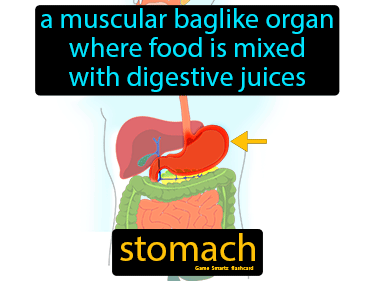 Stomach Science Definition
