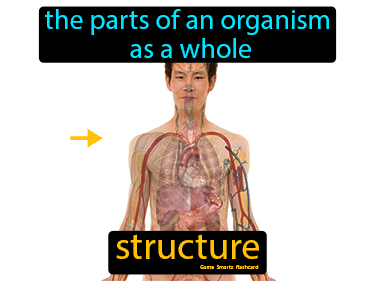 Structure Definition Flashcard