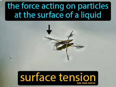 Surface Tension Definition Flashcard