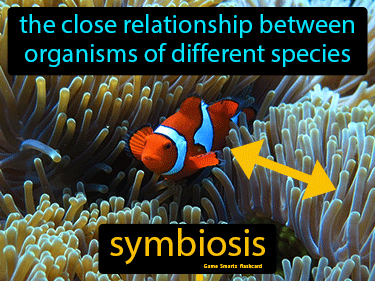 Symbiosis Definition Flashcard