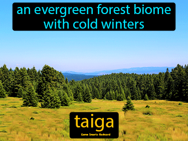 Taiga Definition Flashcard