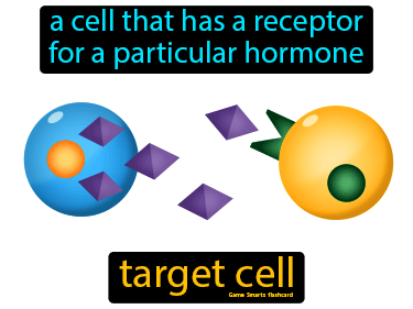 Target Cell Definition Flashcard